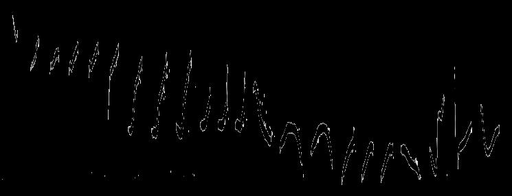 Sonagramm vom Fitislaubsänger